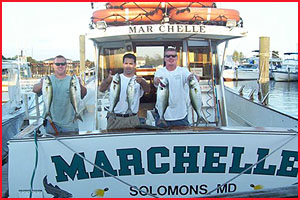 Rock Fish caught on Charter Boat